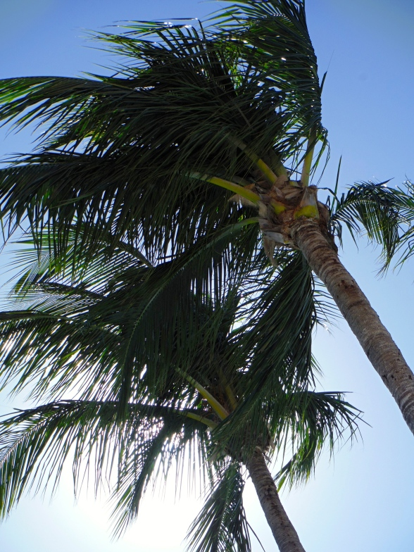 The beauty of a palm against a deep blue sky has always made me smile.