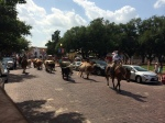 The cattle drive approaches on Exchange Ave in the Fort Worth Stockyards 7.4.214